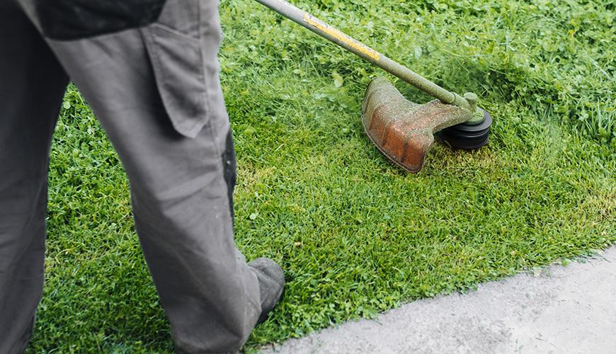 Servizio Gestione del Verde